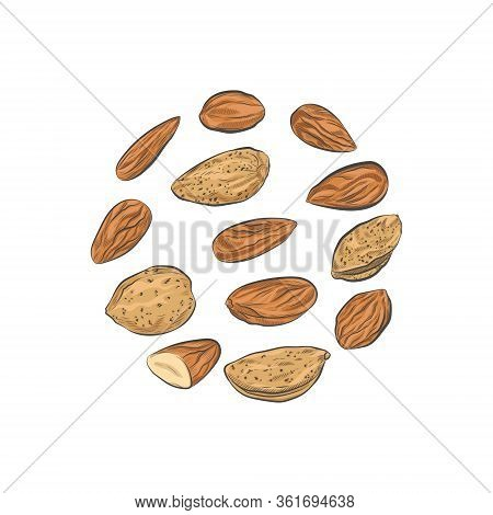 Almond Nuts Vector Sketch. Almond Kernels And Nutshells Isolated On White Background.