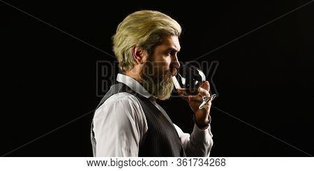 Confident Sommelier. Male Skilled Sommelier Estimates Alcoholic Drink. Red Wine In Wineglasses. Bear