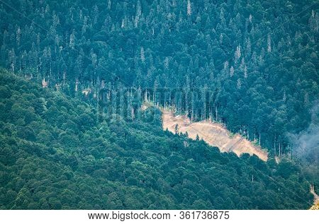 Dense Forest On The Hillside. The Border Of Coniferous And Deciduous Forest. Dirt Road On The Border