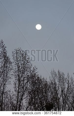 bare tree branches against the moonlit sky