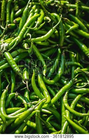 Green Chilli Peppers For Sale At Street Market. Green Chillis Freshly Plucked At The Farm. Fresh Pro