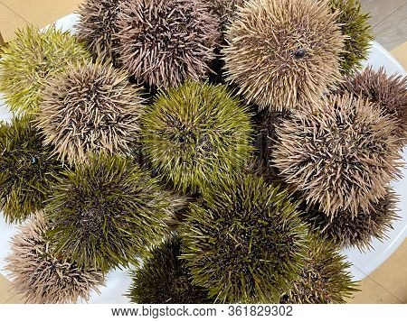 Fresh Sea Urchins Various Color On Dish And Still Alive. Uni Seafood Ingredient.