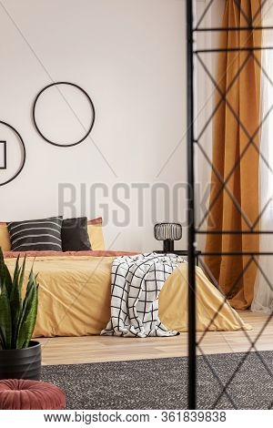 Green Plant In Black Pot Next To King Size Bed In Trendy Bedroom Interior