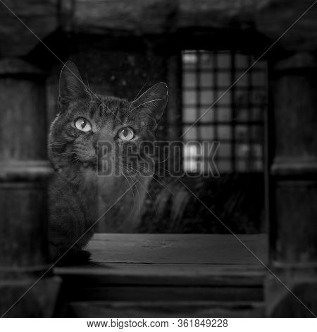 Black And White Shot Of Cat Sitting In Front Of An Old Vintage Window Of Dark Abandoned Building