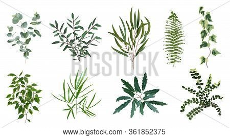 Realistic Green Herb Plants. Nature Plant Leaves, Greenery Foliage, Forest Fern, Eucalyptus Plant, V