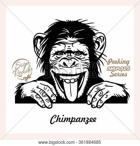 Peeking Chimpanzee - Funny Chimpanzee Peeking Out - Face Head Isolated On White