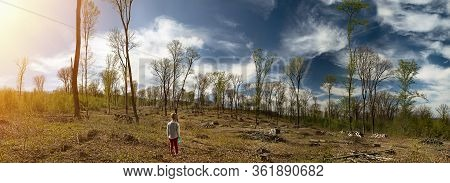 Panorama Of The Site Deforestation. Ecological Problems Of The Planet, Deforestation Of Pine Forests