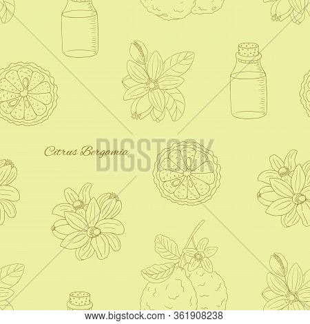 Herbs, And Seasonings Collection. Vector Hand Drawn Illustration Of Citrus Bergamia, Flowers And Fru