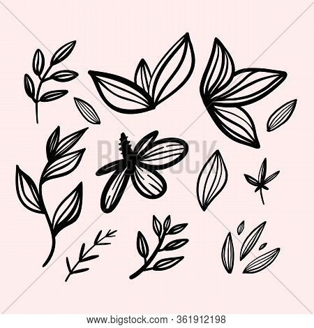 Simple Linear Flower Decoration, Tropical Drawing, Ornament Border