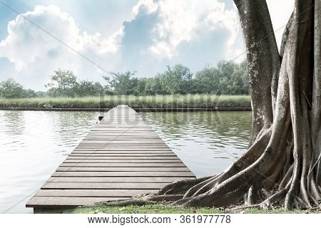 Wood Bridge On The River And Big Tree With Trunk And Roots Spreading Out Beautiful On Grass Green In