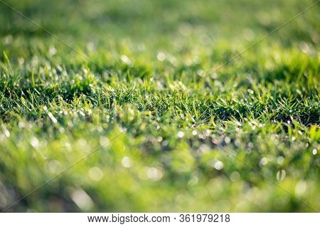 Green Grass Texture Background, Blades Of Green Grass On The Lawn, Detail, Close-up, Blurred Backgro