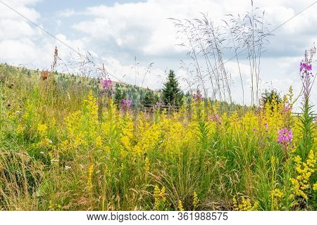 Wild Flowery Field