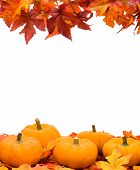 Fall leaves with pumpkin on white background fall harvest frame poster