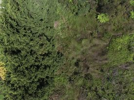Overhead View Of Large A Large Greentree Canopy