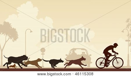 Dogs Chasing Cyclist