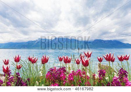Flowers Near Lake, Montreux. Switzerland