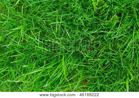 green bright grass for background