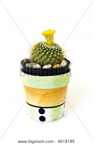 Studio shot cactus isolated on white background poster