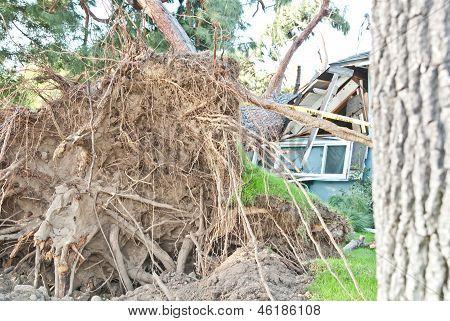 Tree Damages House