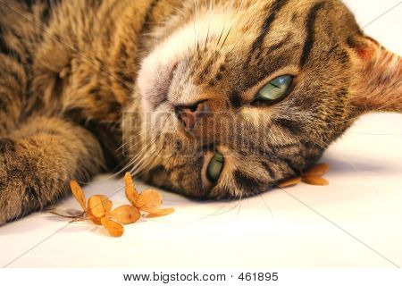 poster of cat relaxing near little flowers