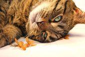 cat relaxing near little flowers poster