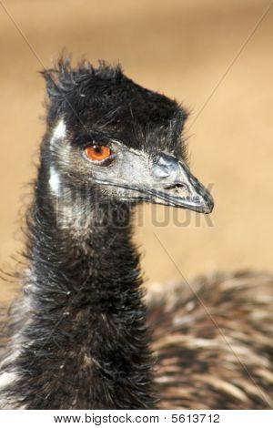 Mad Emu