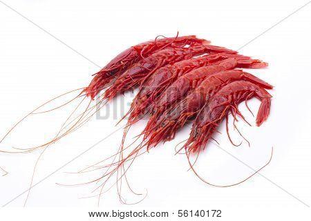 Shellfish Red