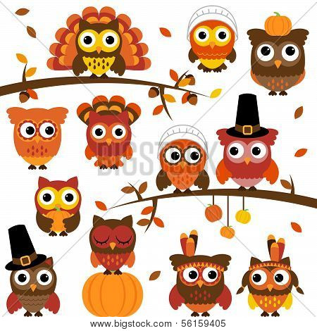 Thanksgiving and Autumn Themed Vector Owl Collection with Branches