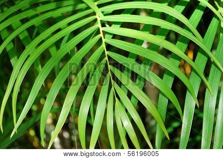 Palm tree leaf background