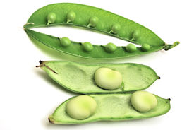 Bean And Pea Pods