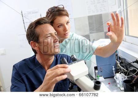 Biologists checking on blood sample