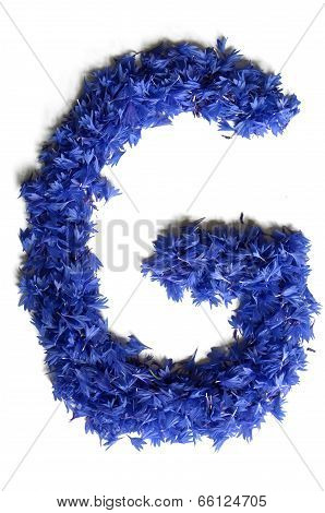 Letter G Made Of Flowers (cornflowers) Isolated On White Background