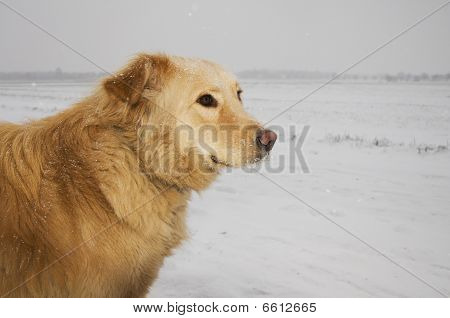 Dog In A Snowstorm
