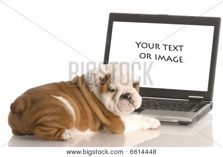 Puppy Looking At Computer