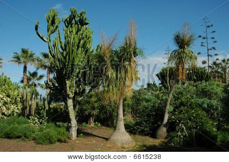 Palm trees and cactuses