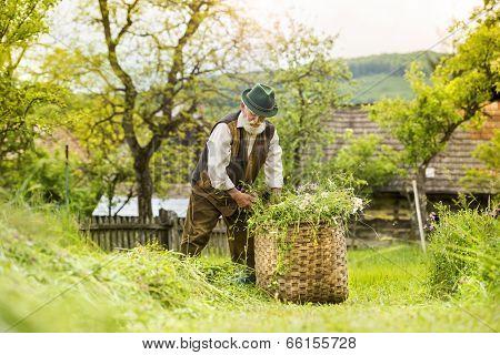 Senior man working