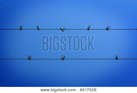 A couple of swallows sitting on wires. poster