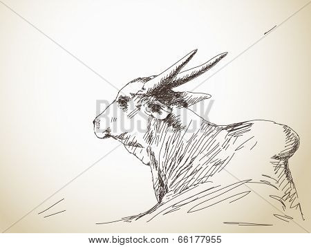 Zebu cow portrait with big horns, Hand drawn sketch, Vector illustration