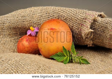 New Potatoes With Leaves And Flower On Sackcloth
