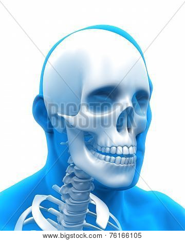 Human Skull Anatomy Illustration