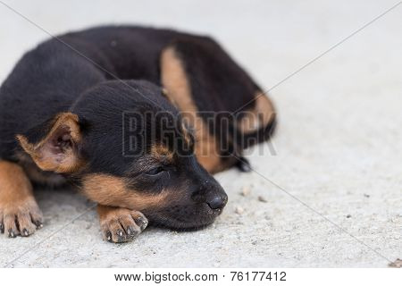 Close Up Squalid Young Baby Dog