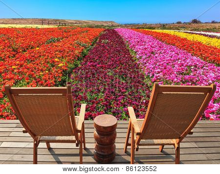 The spring blossoming buttercups  grow multi-colored strips. Two chaise lounges for rest stand on a scaffold at a picturesque flower field poster