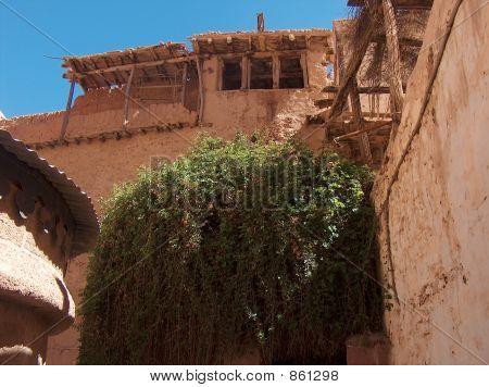 The Burning Bush at St Catherine's Monastery, Sinai, Egypt