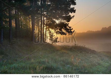 Foggy Morning On Polish Meadow