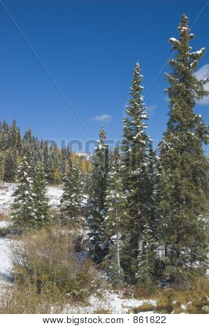 Snowy woods on the Grand Mesa, Colorado poster