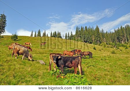 Cows and horses on a hillside.