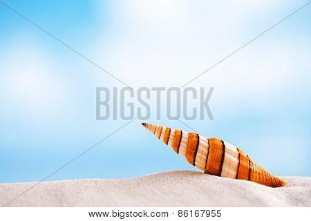 clown sea shell with ocean , beach and seascape , shallow dof
