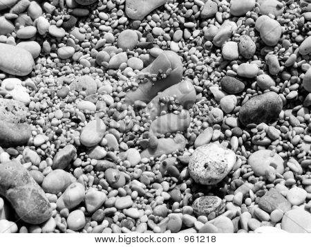 Pebbles  Toes