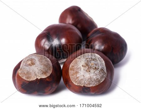 horse chestnut conkers isolated on white background