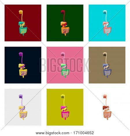 icons set in flat style human digestive system